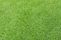 ARTIFICAL-GRASS